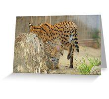Serval Cat & Male Kitten Greeting Card