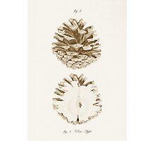 Pine Apple Photographic Print