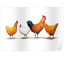 Three chooks and a rooster Poster