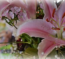 Pink Lily by PicsbyJody