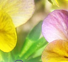 Pansies for Easter Sticker