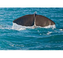 Whale Diving 2 Photographic Print