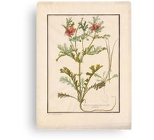 French School 18th century Plate Canvas Print