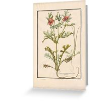 French School 18th century Plate Greeting Card