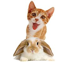 rabbit-cat Photographic Print