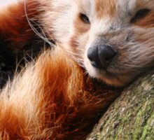 RED PANDA Sticker