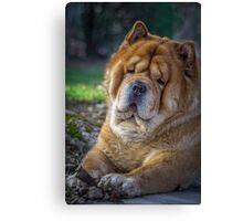 Cute chow dog portrait Canvas Print