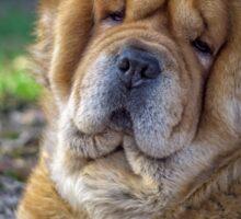 Cute chow dog portrait Sticker