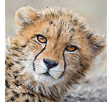 LEOPARD LAYING DOWN Photographic Print