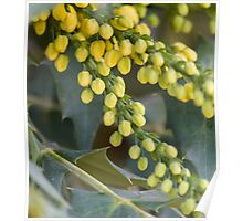 flower on plant in autumn Poster