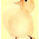 Easter Chick by Shelly Still