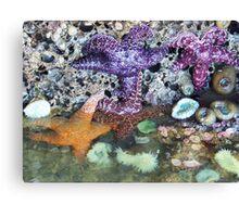 4 Starfish Canvas Print