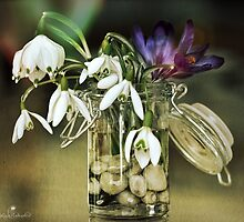 Snowdrops on the last Winters Day by © Kira Bodensted