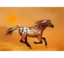 An Appaloosa Called Ginger'... Photographic Print