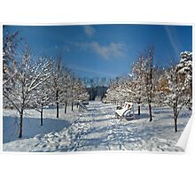 Winter alley of trees, Siberia, Russia Poster