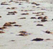 Sandy Trails Sticker