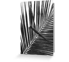 Palm Frond in Black and White, #13 Greeting Card