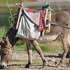 donkey, time out by davejw