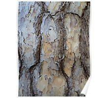 The pine tree closeup Poster