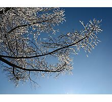 tree branch in the snow Photographic Print