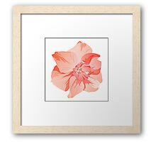 Pretty Pink Daffodil Graphic Framed Print