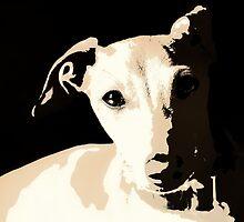 Poster of an Italian Greyhound Portrait by AngelaRath