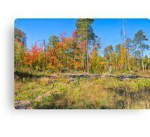 Natural Landscaping Canvas Print