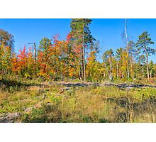 Natural Landscaping Photographic Print