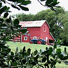 """Red Barn Through The Green Foliage""... prints and products by © Bob Hall"