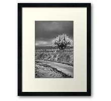 Vineyard Track Framed Print