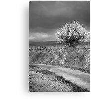Vineyard Track Canvas Print
