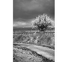 Vineyard Track Photographic Print