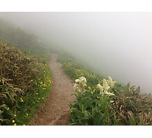 Wild Flower Trail on Hakusan Photographic Print