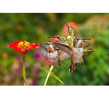 Guarding The Zinnia Photographic Print