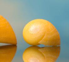 Yellow Seashells Sticker