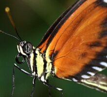 I am Butterfly Sticker