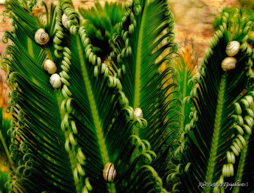 Gathering of the Palm Snails by Rhonda Strickland