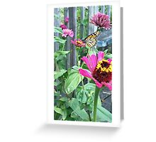 Monarch Butterfly Zinnia Greeting Card