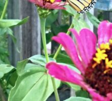 Monarch Butterfly Zinnia Sticker