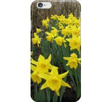 Daffodils in Woodland iPhone Case/Skin