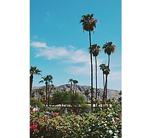 Desert Blooms No.3 (Palm Springs) Photographic Print
