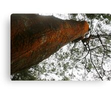 Tree branches bottom view  Canvas Print