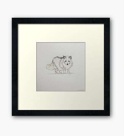 Swift Art, Artic Fox Framed Print