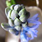 Violet Hyacinth by MarianBendeth