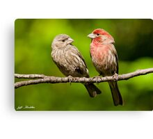Pair of House Finches in a Tree Canvas Print