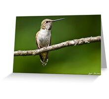 Female Rufous Hummingbird in a Tree Greeting Card