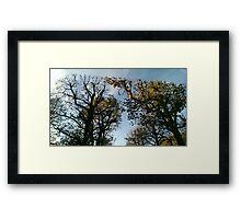 Vienna trees autumn Framed Print