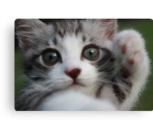 kitten Canvas Print