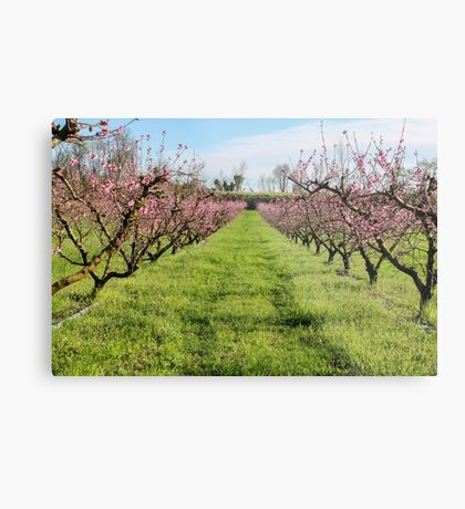 plant of peach Metal Print