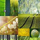 4 Seasons - Spring - 4 Jahreszeiten Frühling by Martina Cross
